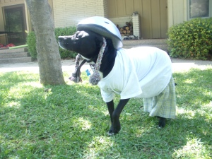 A dog that had the patience to be dressed like this deserved a second chance.