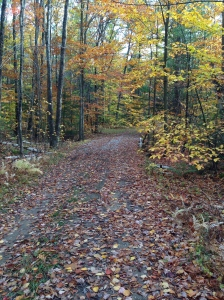 This is a picture of the fall leaf colors on my solitary hike in New Hampshire.