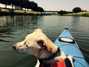 This is a photo of a dog in a kayak.